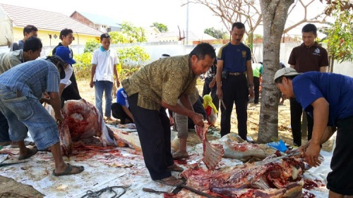 Pemotongan Kurban HTI Kota Banjarbaru (5)